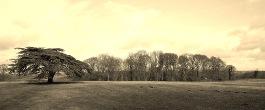 Cedar Fields in Market Bosworth Countryside
